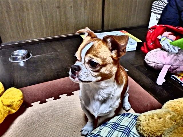 f:id:yasukazu01:20131216223323j:image