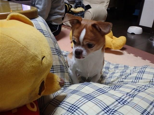 f:id:yasukazu01:20131216224833j:image