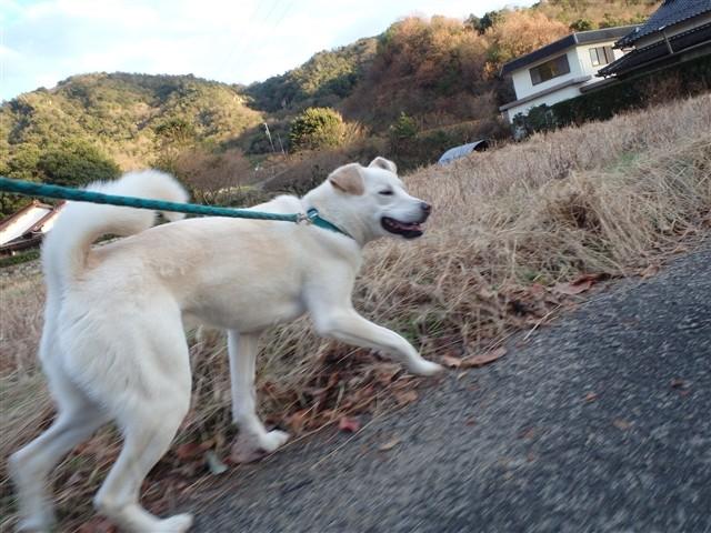 f:id:yasukazu01:20131218202427j:image