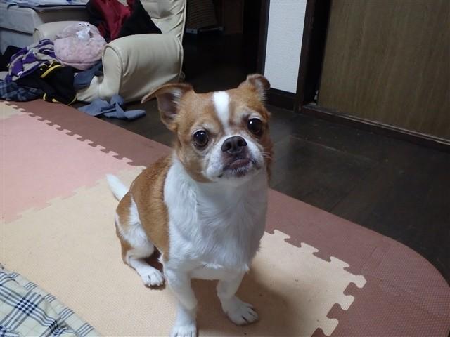 f:id:yasukazu01:20131220224610j:image