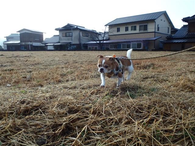 f:id:yasukazu01:20131222195943j:image