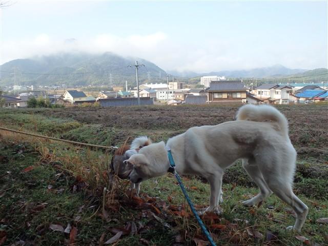 f:id:yasukazu01:20131222200344j:image