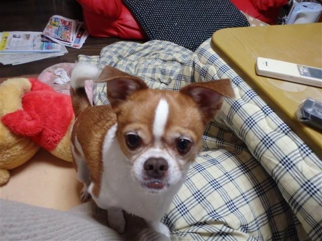 f:id:yasukazu01:20131230223436j:image