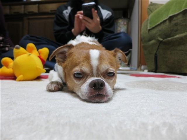 f:id:yasukazu01:20140109223642j:image