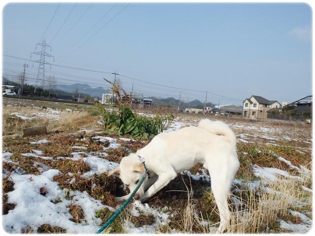 f:id:yasukazu01:20140111194358j:image