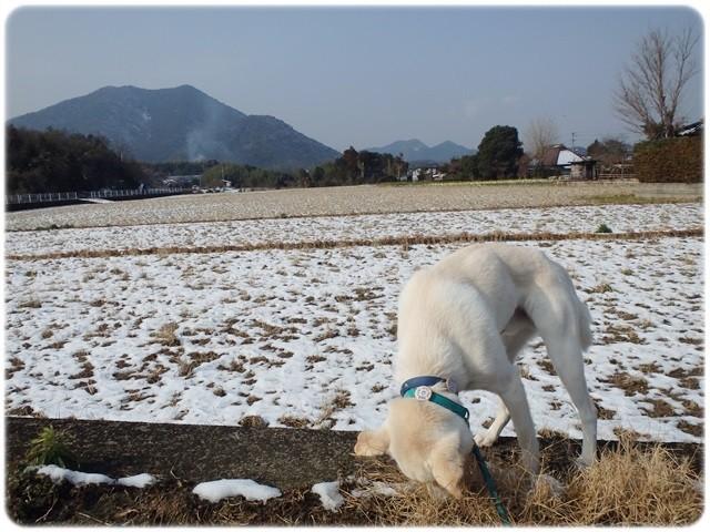 f:id:yasukazu01:20140111194708j:image