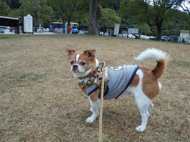 f:id:yasukazu01:20140112221921j:image