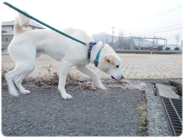 f:id:yasukazu01:20140113193636j:image