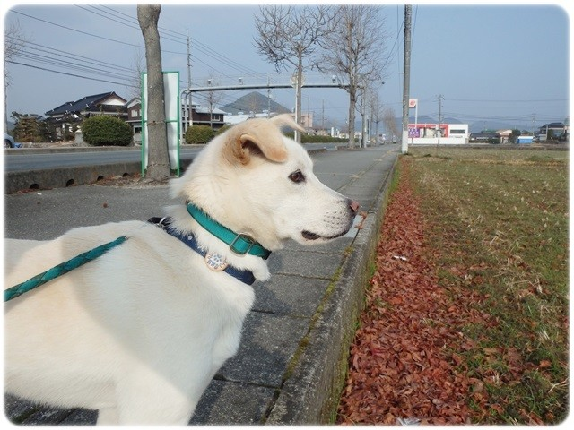 f:id:yasukazu01:20140113194050j:image