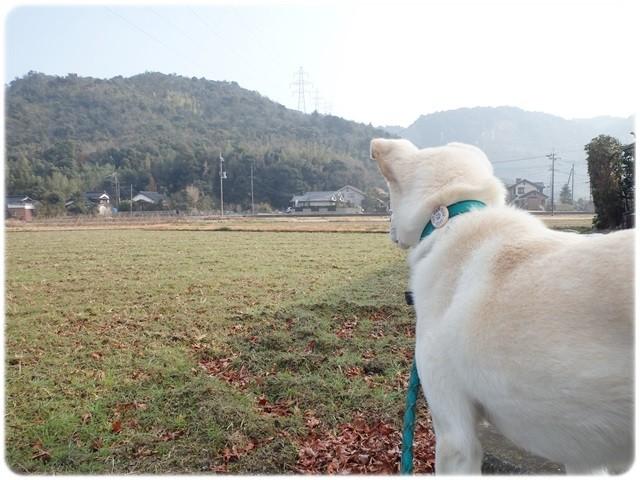f:id:yasukazu01:20140113194323j:image