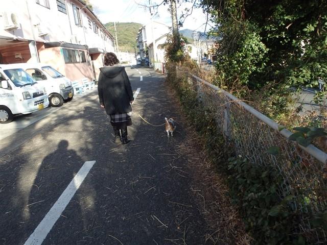 f:id:yasukazu01:20140113195004j:image