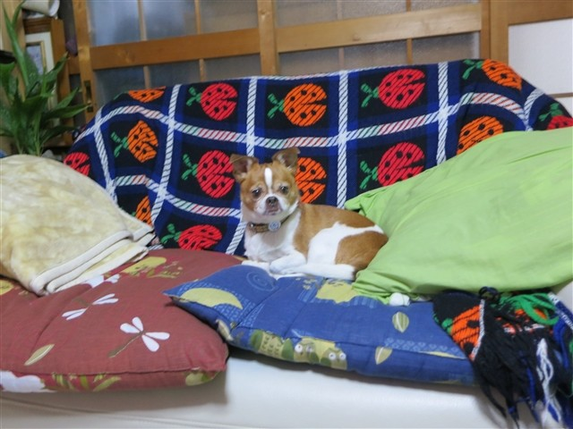 f:id:yasukazu01:20140118200532j:image