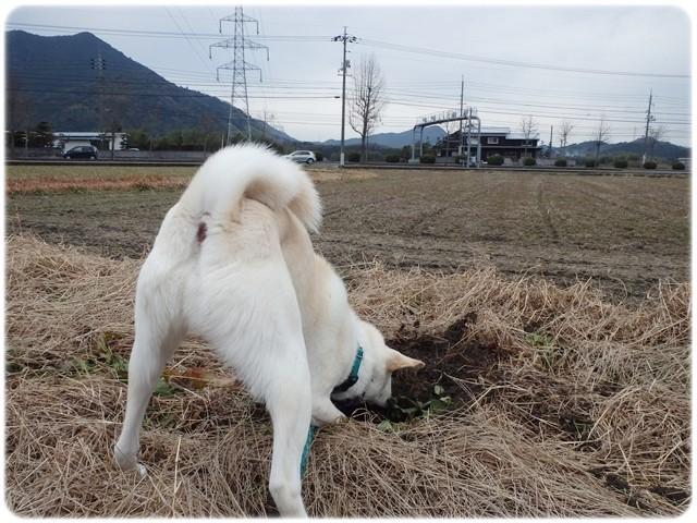f:id:yasukazu01:20140121221330j:image