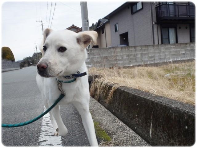 f:id:yasukazu01:20140121221652j:image