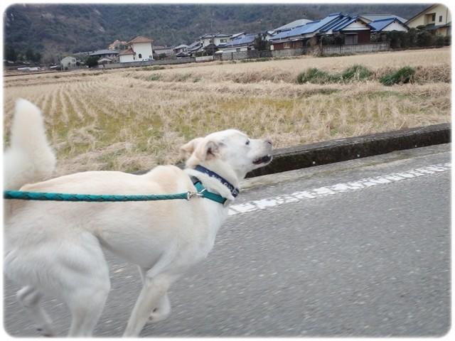 f:id:yasukazu01:20140121221743j:image