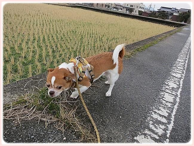 f:id:yasukazu01:20140127230009j:image
