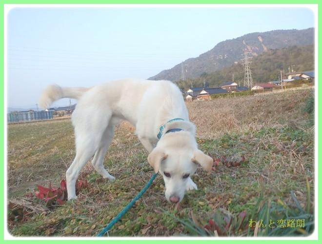 f:id:yasukazu01:20140202223901j:image