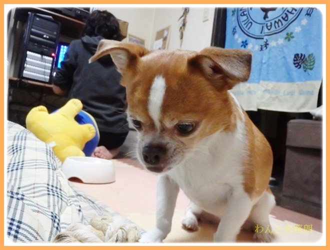 f:id:yasukazu01:20140206222135j:image