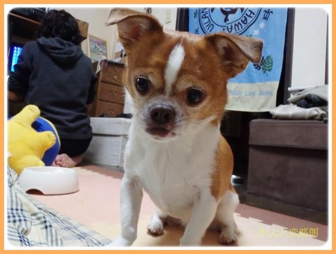 f:id:yasukazu01:20140206222136j:image