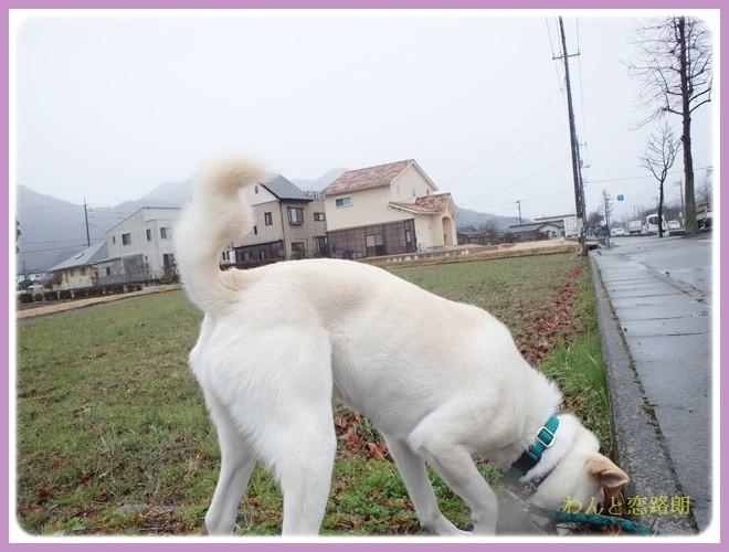f:id:yasukazu01:20140207211601j:image