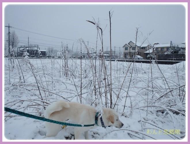 f:id:yasukazu01:20140208181202j:image