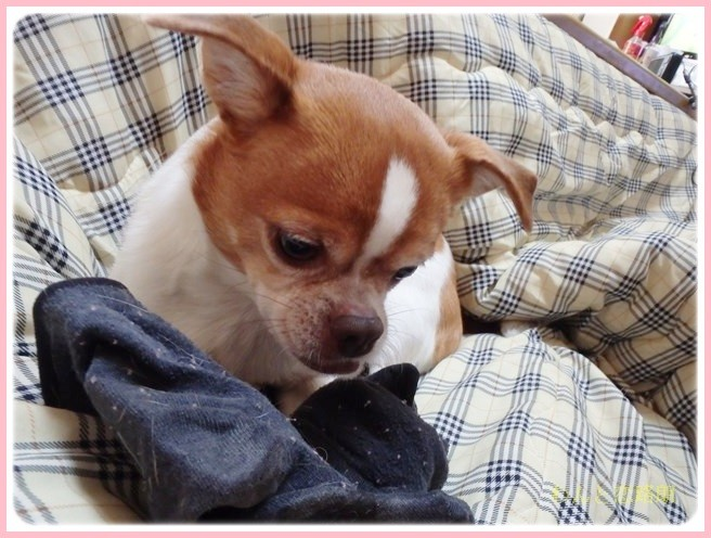 f:id:yasukazu01:20140217222628j:image