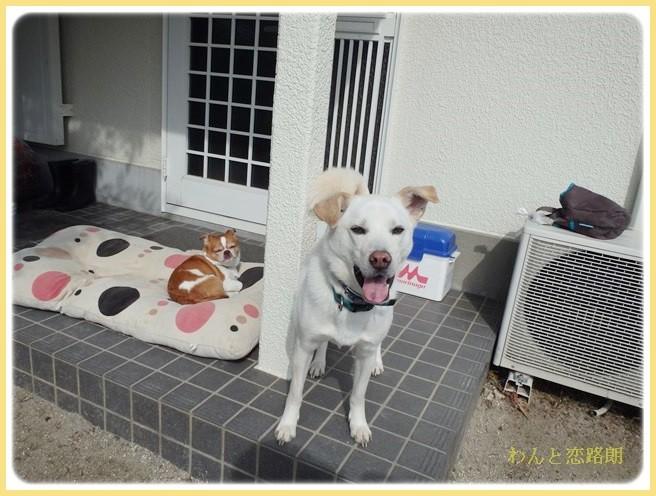 f:id:yasukazu01:20140221211446j:image