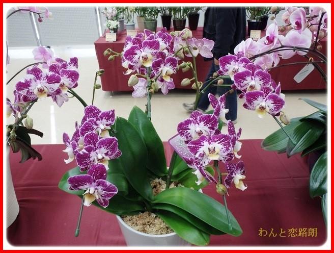 f:id:yasukazu01:20140223202953j:image