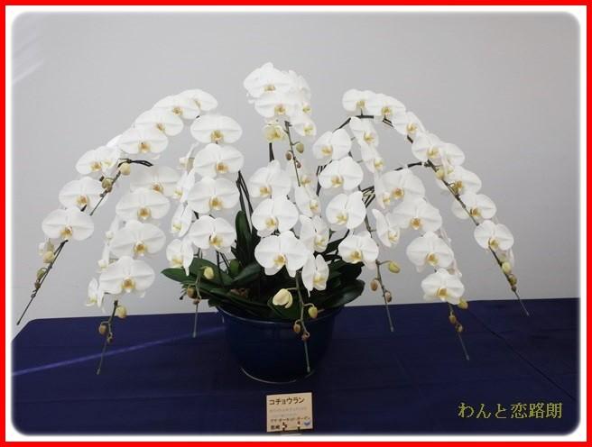 f:id:yasukazu01:20140223204238j:image