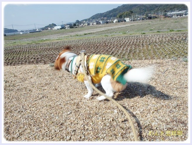 f:id:yasukazu01:20140315203209j:image