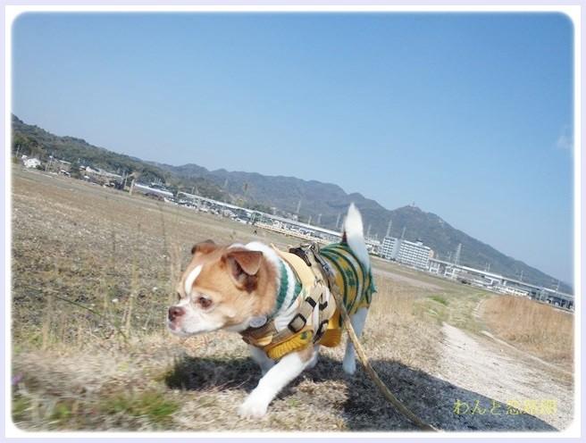 f:id:yasukazu01:20140315203754j:image