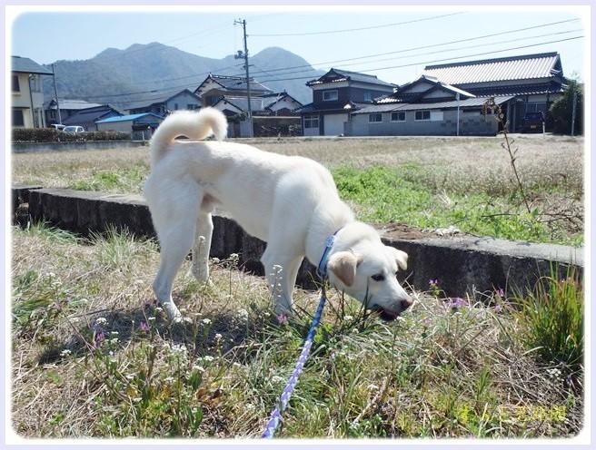 f:id:yasukazu01:20140317202902j:image