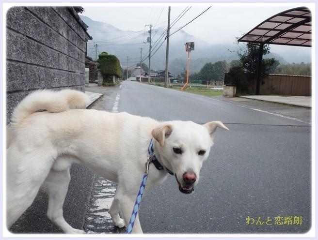 f:id:yasukazu01:20140318185944j:image
