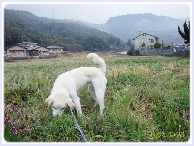 f:id:yasukazu01:20140318185948j:image