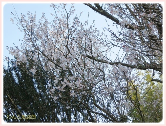 f:id:yasukazu01:20140326201255j:image
