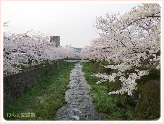f:id:yasukazu01:20140404203229j:image