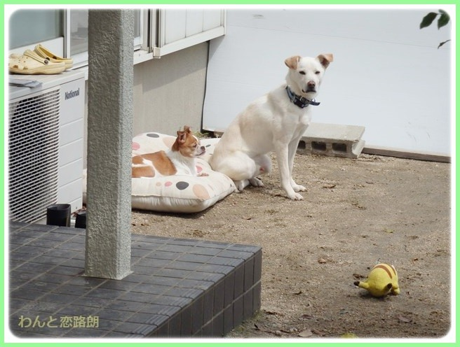 f:id:yasukazu01:20140408215627j:image