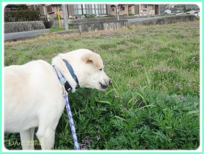 f:id:yasukazu01:20140412201840j:image