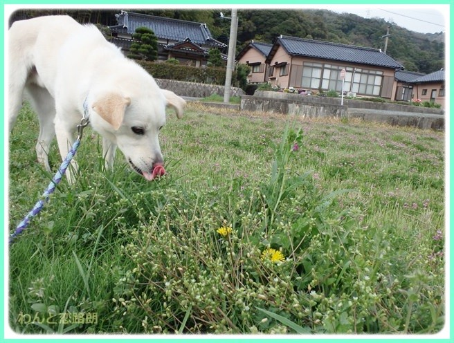 f:id:yasukazu01:20140412201841j:image