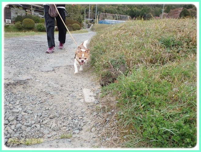 f:id:yasukazu01:20140412202518j:image