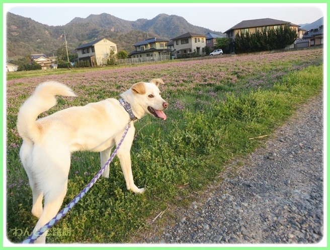 f:id:yasukazu01:20140415211807j:image
