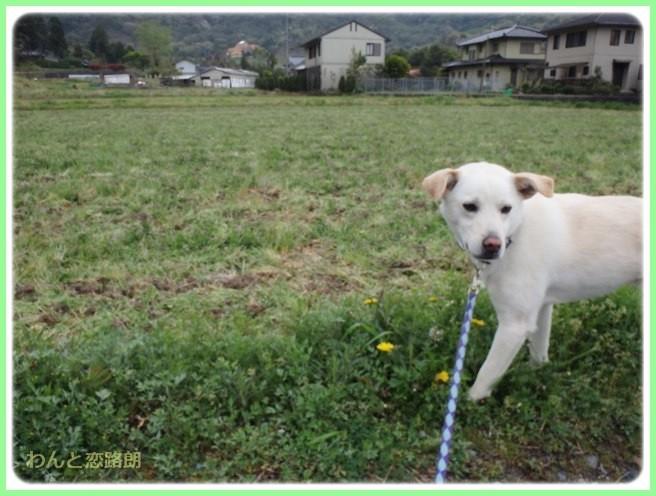 f:id:yasukazu01:20140418204815j:image