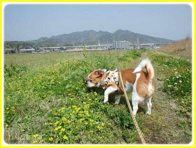 f:id:yasukazu01:20140419184054j:image