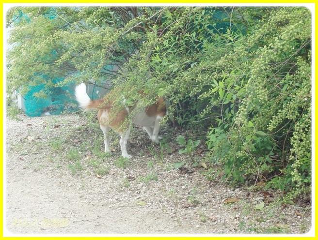 f:id:yasukazu01:20140423101635j:image