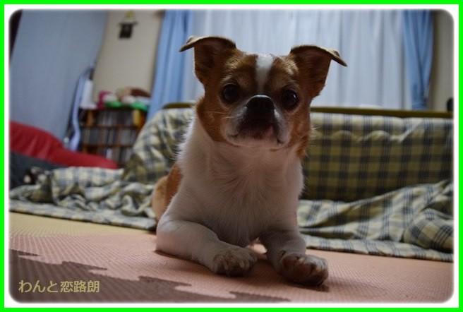f:id:yasukazu01:20140504221339j:image
