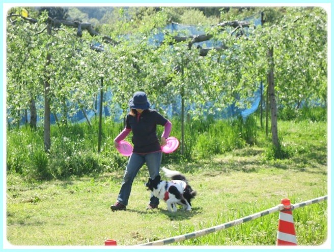 f:id:yasukazu01:20140507214229j:image
