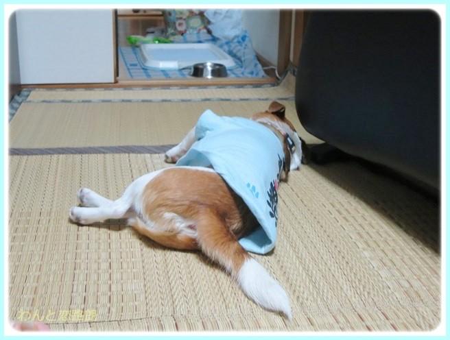 f:id:yasukazu01:20140511214222j:image