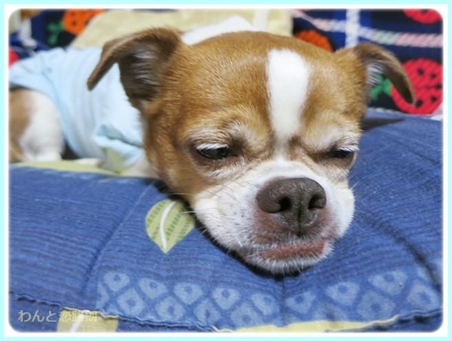f:id:yasukazu01:20140511214224j:image