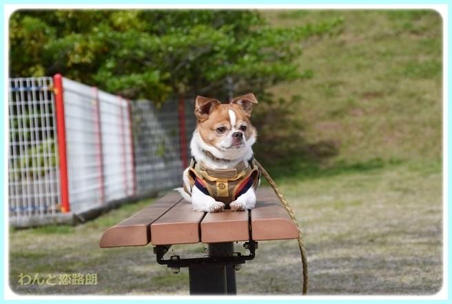 f:id:yasukazu01:20140513200026j:image