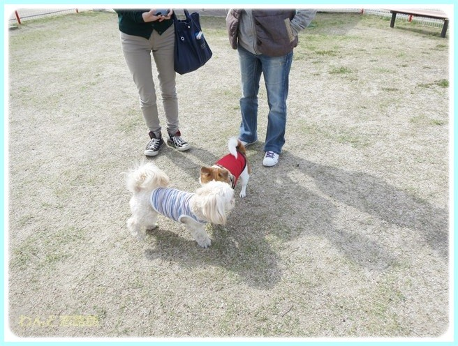 f:id:yasukazu01:20140513200027j:image